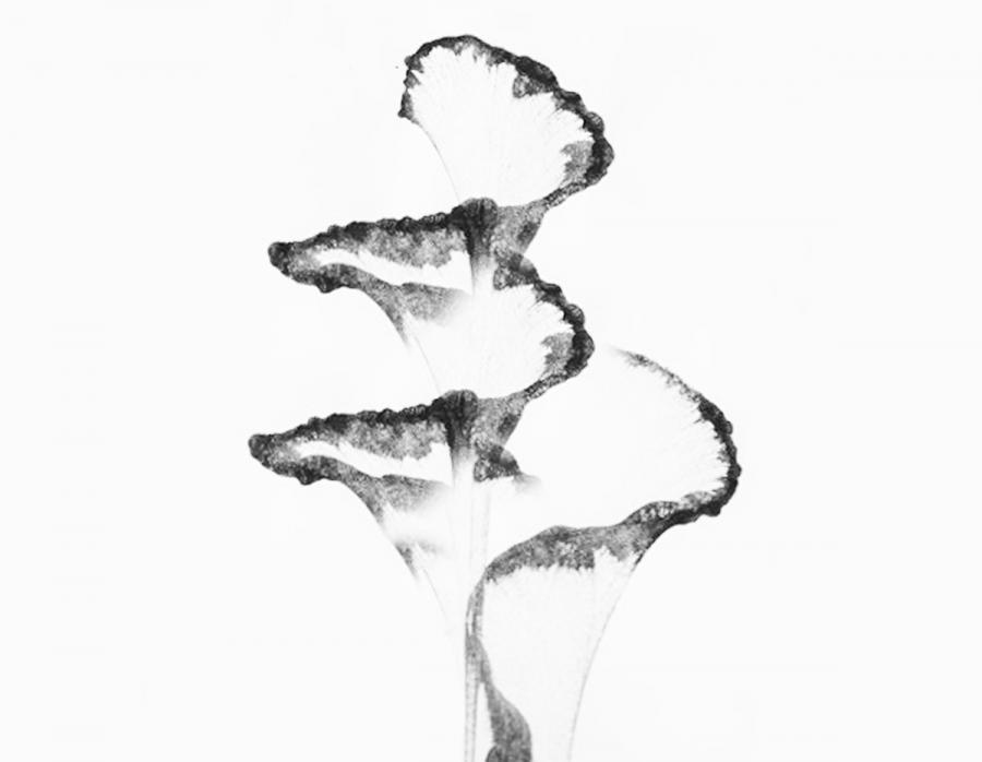 Mal med garn og lav smukke blomster